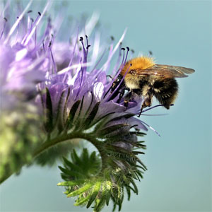 Honig aus Schwabmünchen - erzeugt im Naturpark Augsburg Westliche Wälder