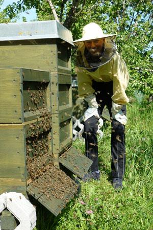 Imkerei Weiss - Jung-Imker Florian Weiss am Bienenstandort