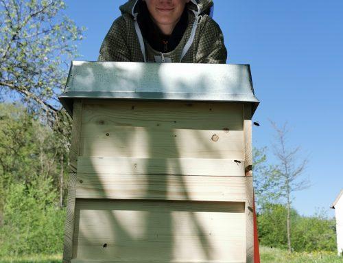 Bienenschwarm in Klosterlechfeld fangen und kostenlos entfernen