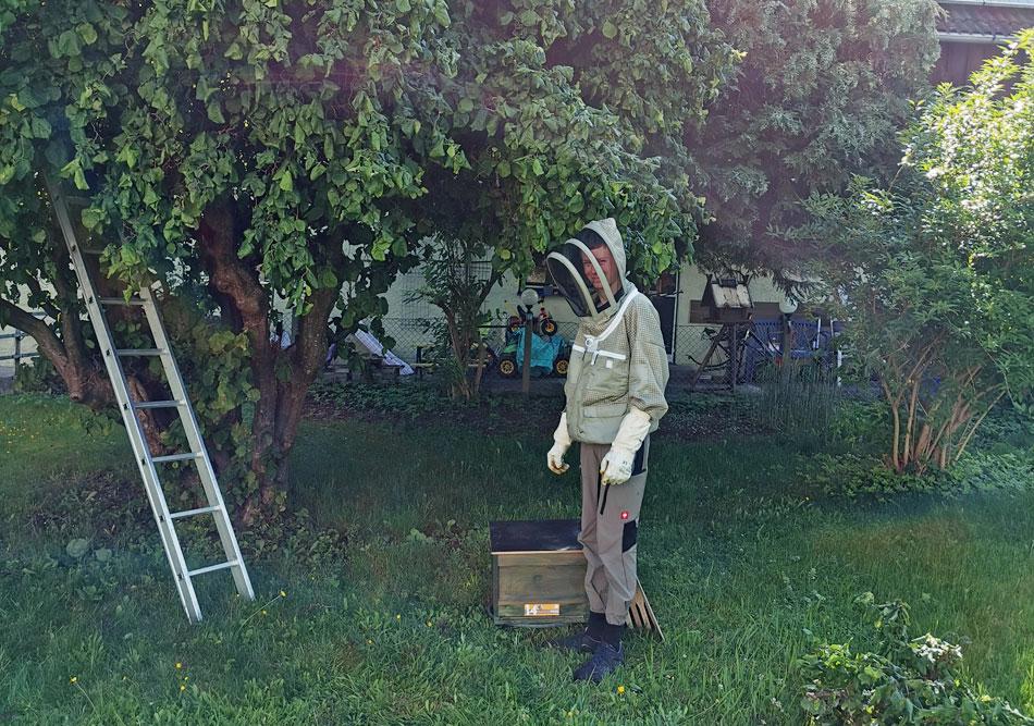 Imker Florian Weiß fängt Bienenschwarm in Schwabmünchen ein