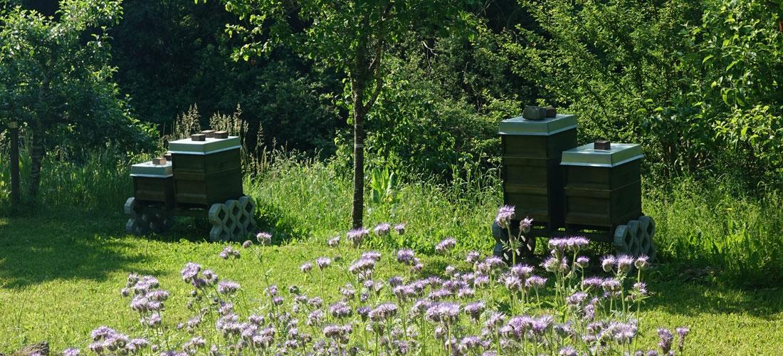 Bienenschwarm in Klosterlechfeld erhält im Naturpark Augsburg ein neues Zuhause